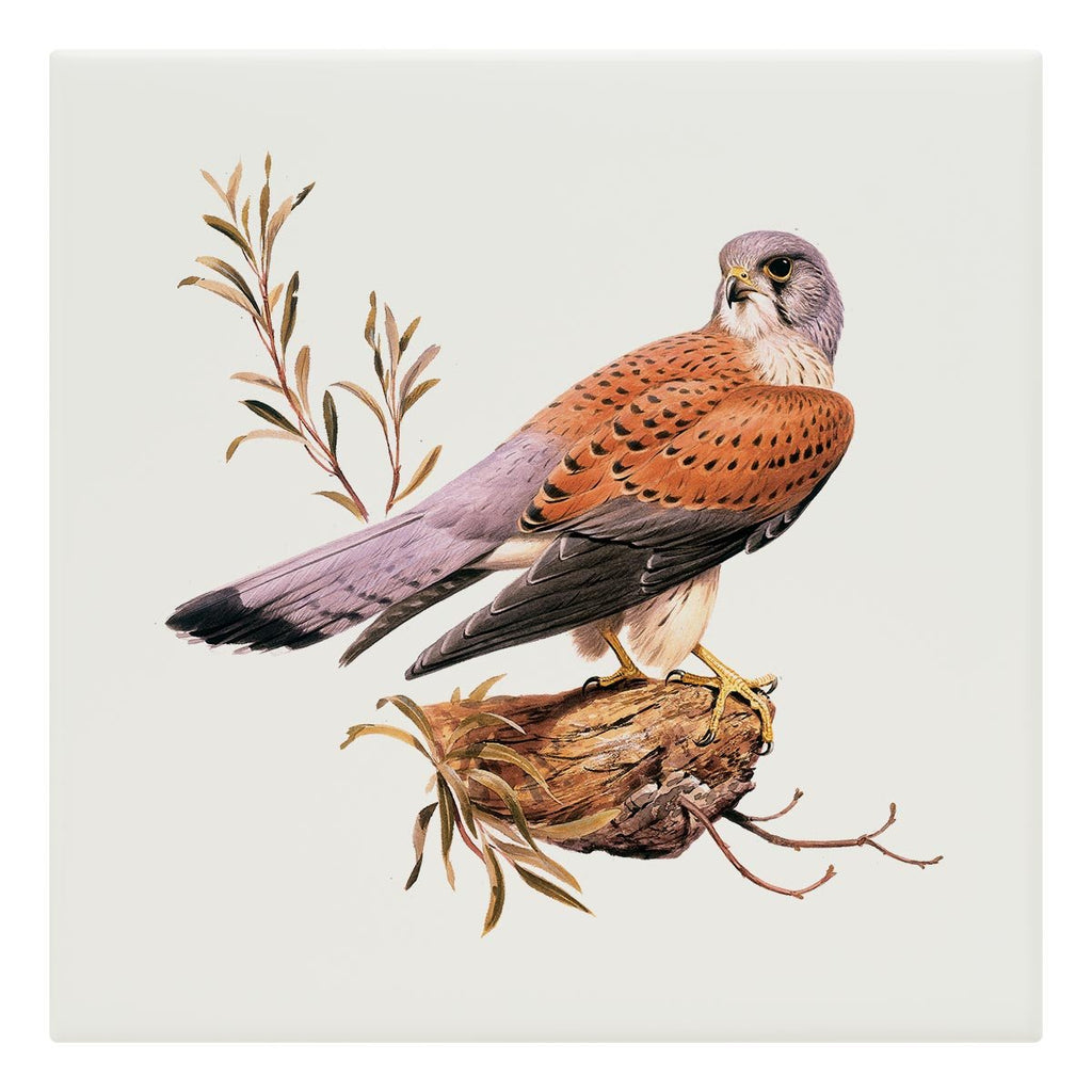 Kestrel Tile - Countryman John