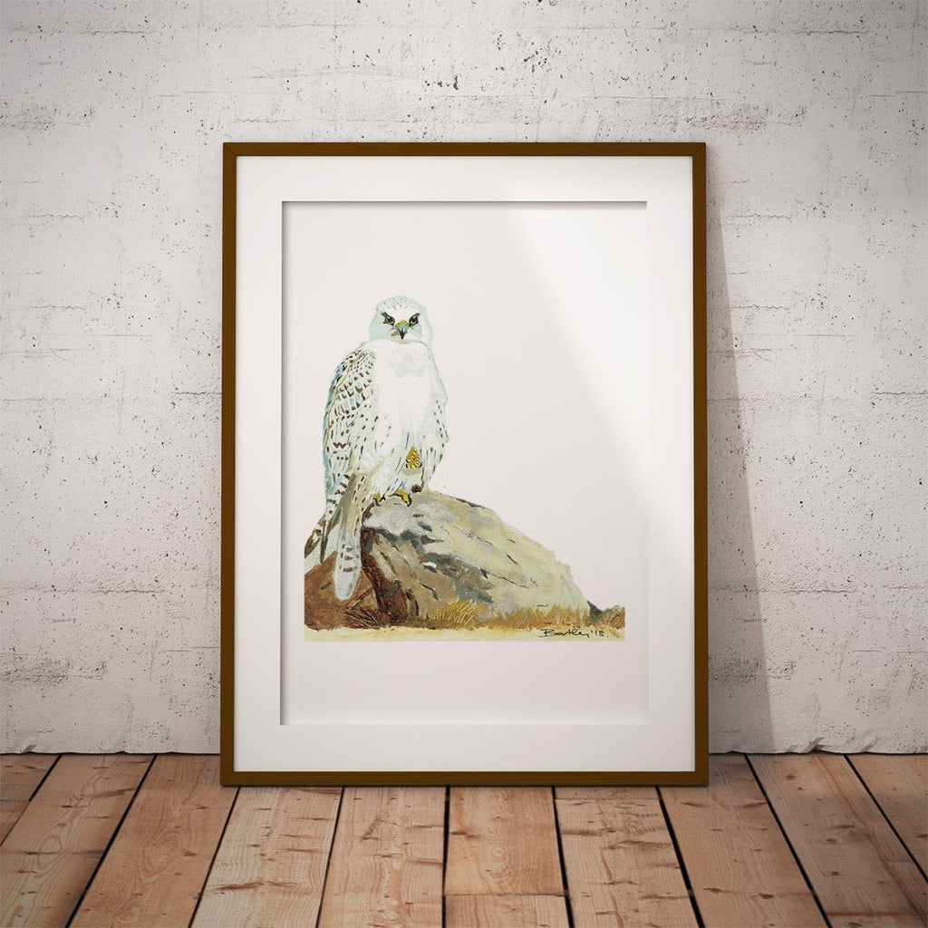 Gyr Falcon Wall Art Print - Countryman John