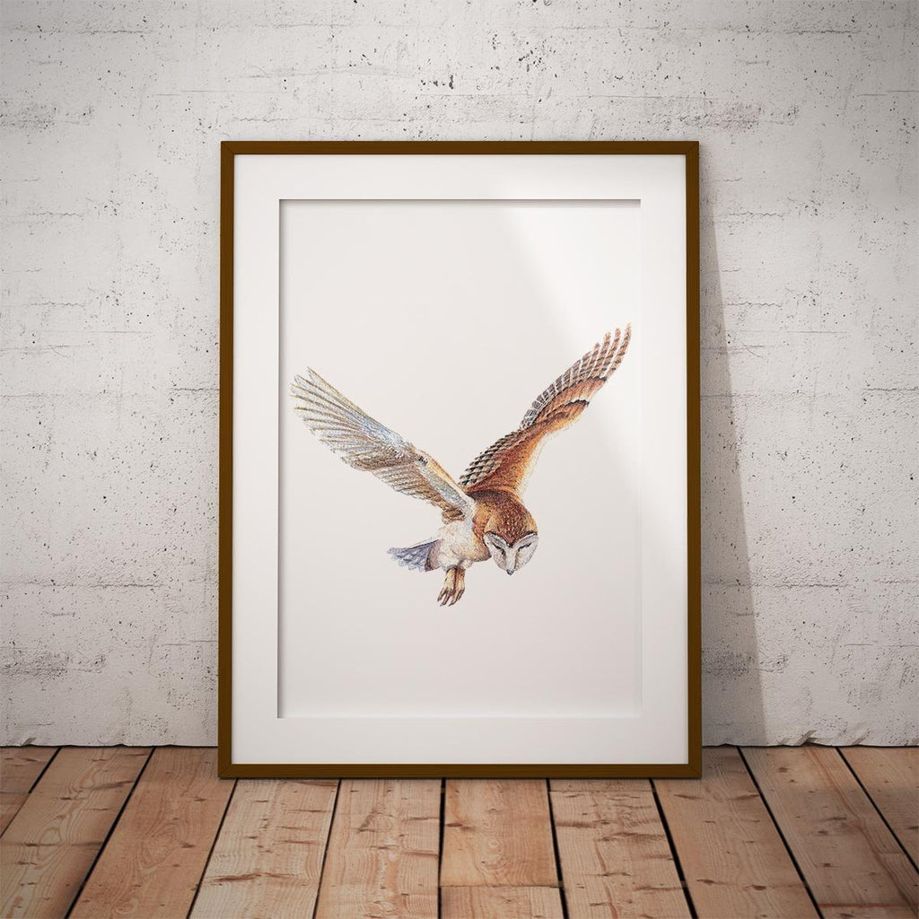 Barn Owl in Flight Wall Art Print - Countryman John