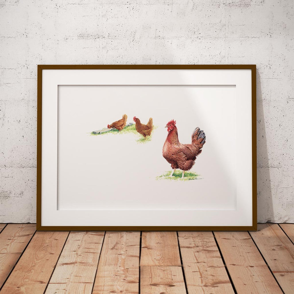 Hens Wall Art Print - Countryman John