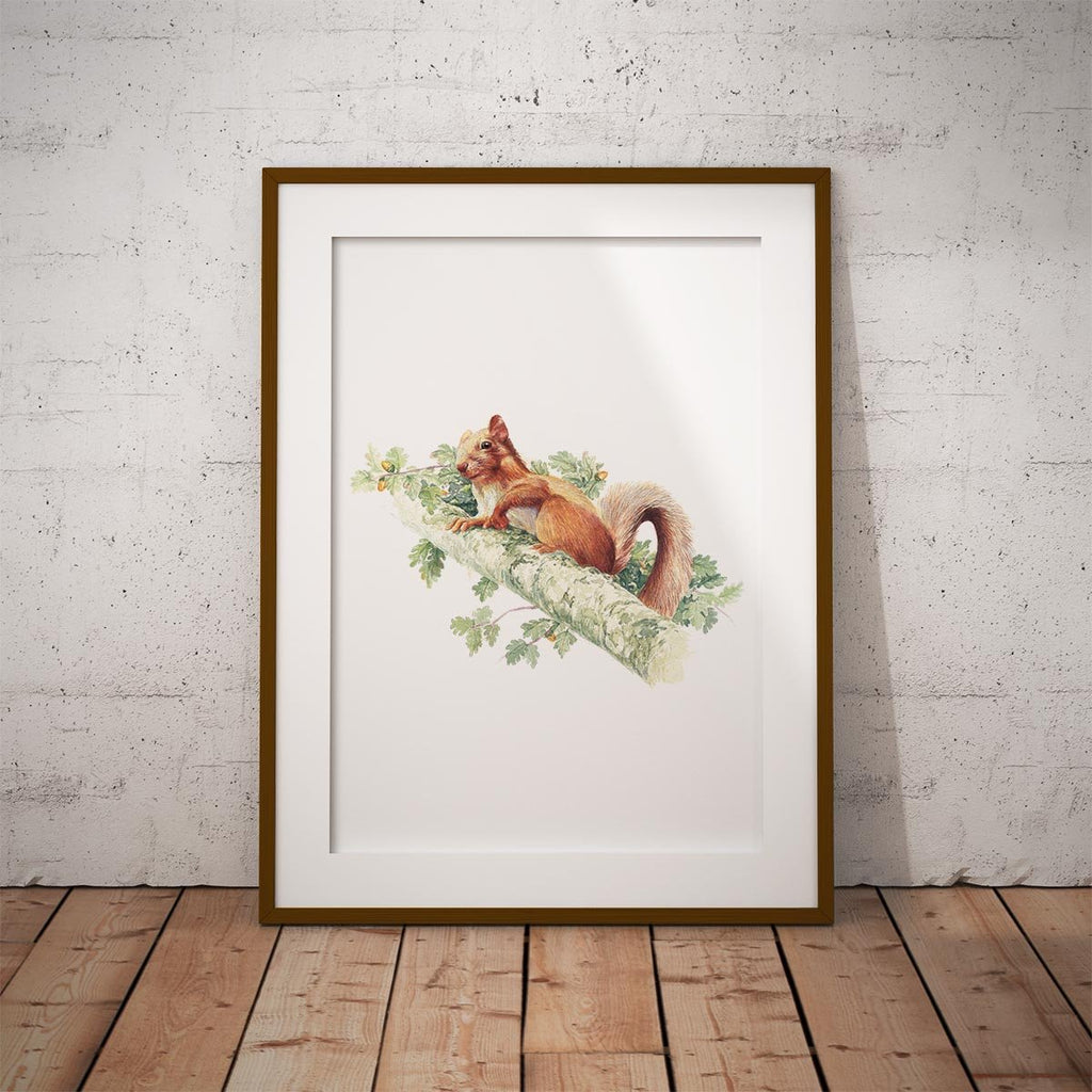 Red Squirrel Wall Art Print - Countryman John
