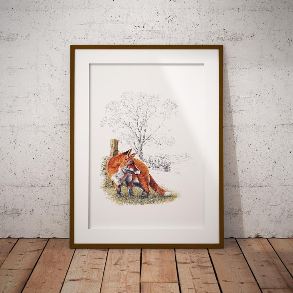 Fox Wall Art Print - Countryman John