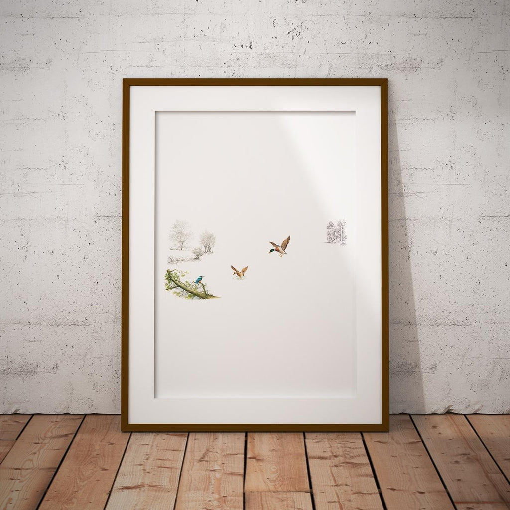 Kingfisher and Ducks Wall Art Print - Countryman John