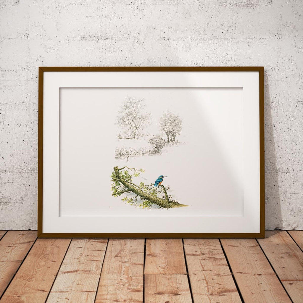 Kingfisher Alone Wall Art Print - Countryman John