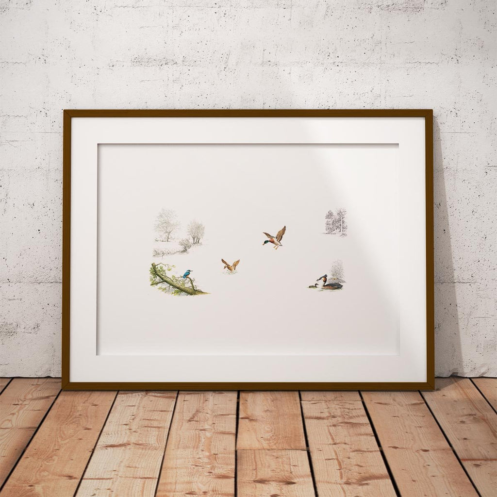 Kingfisher Ducks and Grebe Wall Art Print - Countryman John