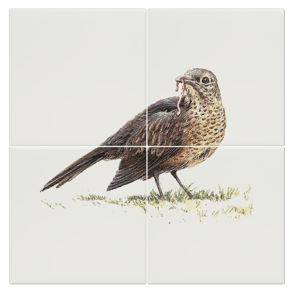 Song Thrush Tile - Countryman John