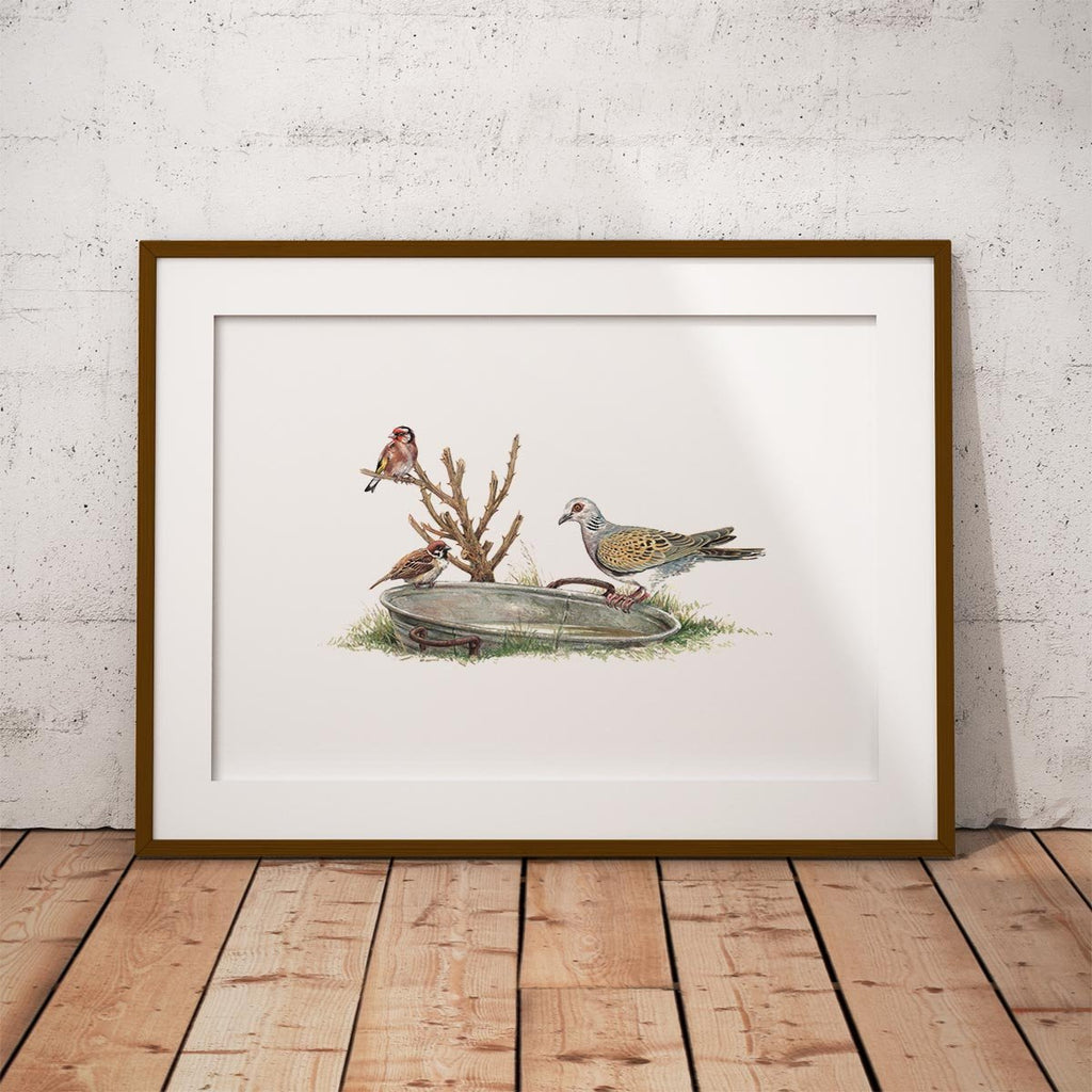 Turtle Dove Wall Art Print - Countryman John