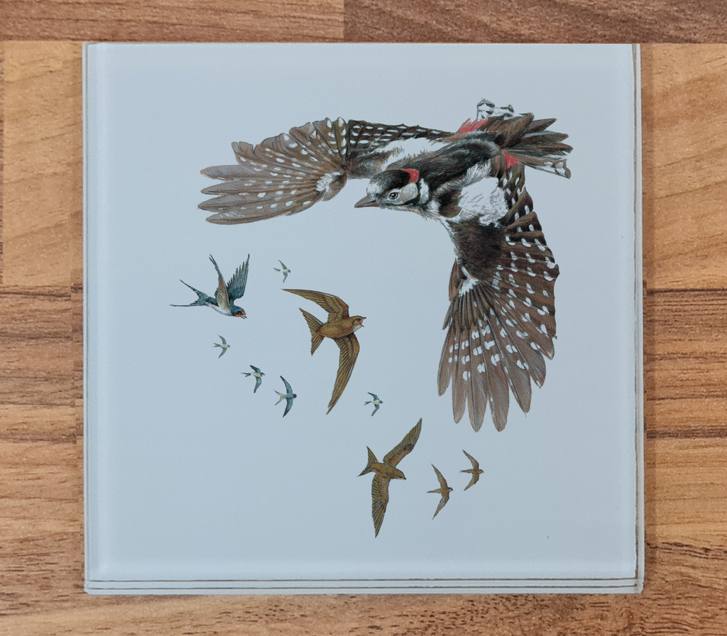 Woodpecker, Swallows and Swifts Glass Coaster