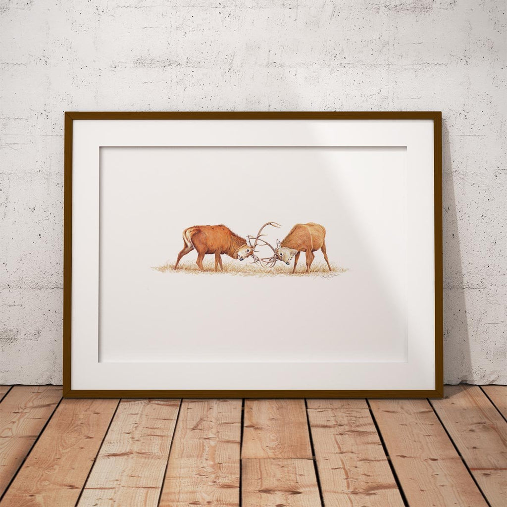 Duelling Stags Wall Art Print - Countryman John