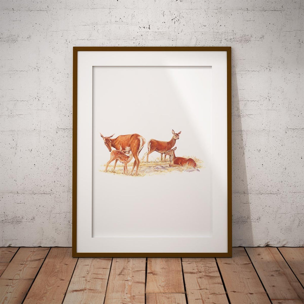 Red Hind with Calf Wall Art Print - Countryman John