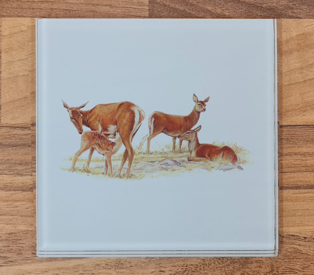 Red Hind with Calf Glass Coaster