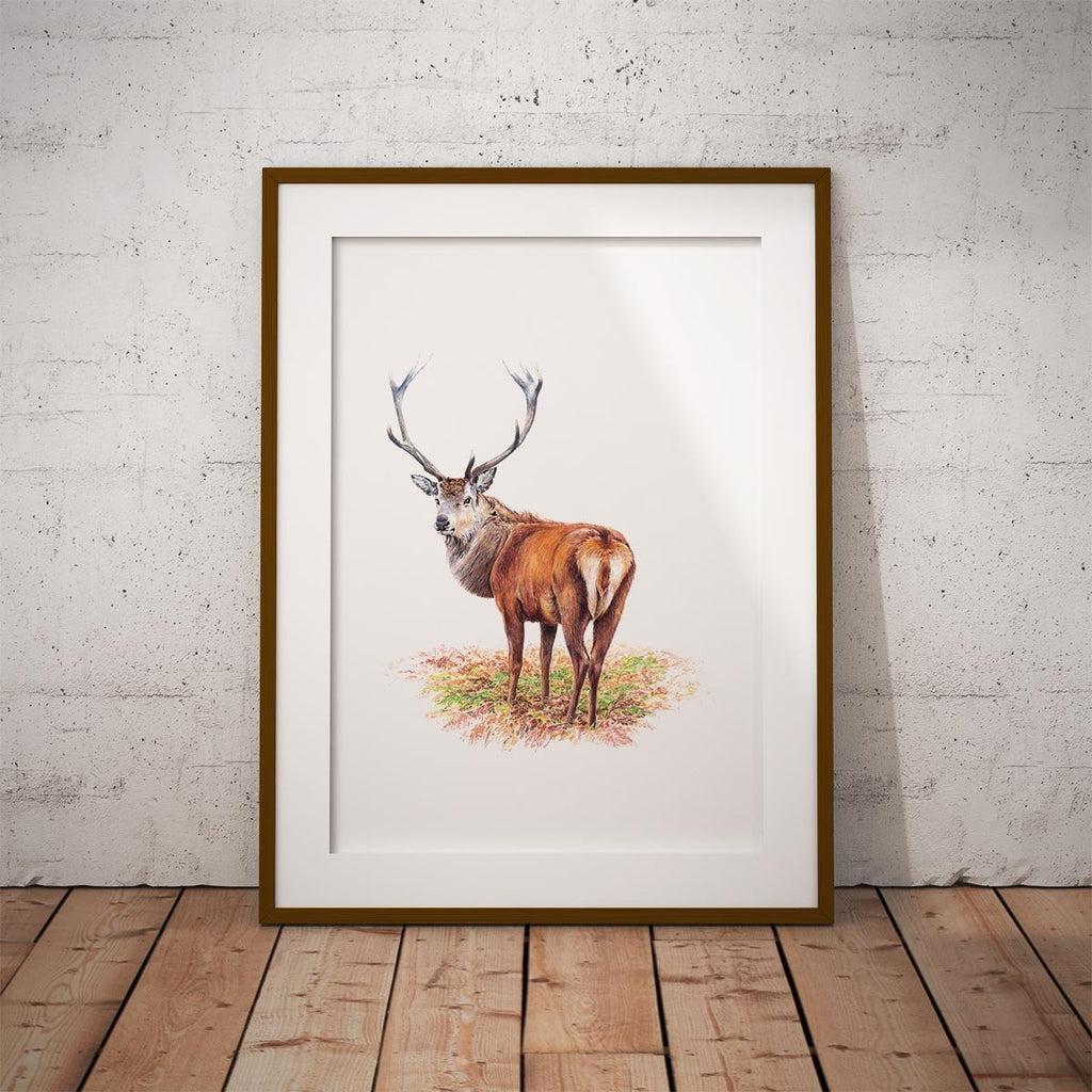 Proud Red Stag Wall Art Print - Countryman John