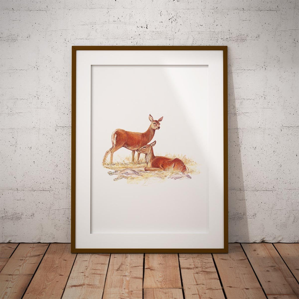Red Hind Deer Wall Art Print - Countryman John