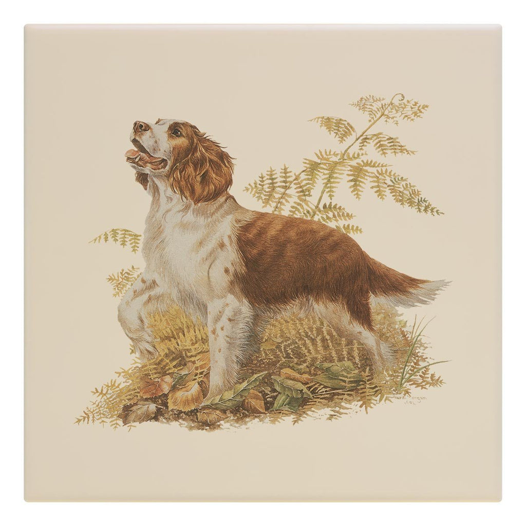Brown and White Springer Spaniel Tile - Countryman John