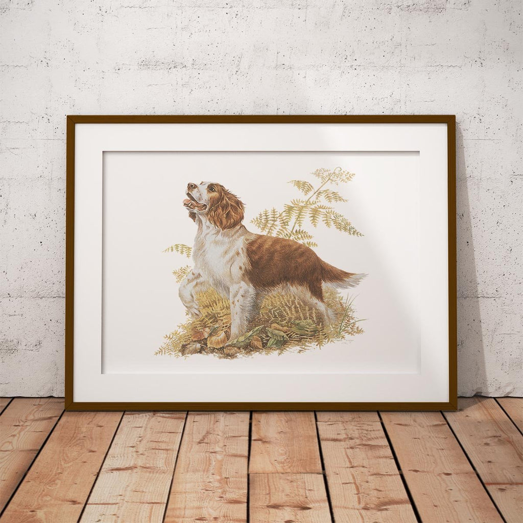 Brown and White Springer Spaniel Wall Art Print - Countryman John