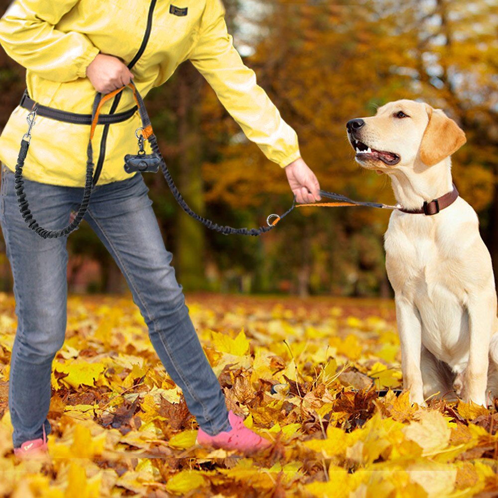 Reflective Dual Handle Dog Leash