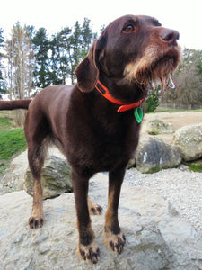 Ultrahund Play Regular Collar - Orange