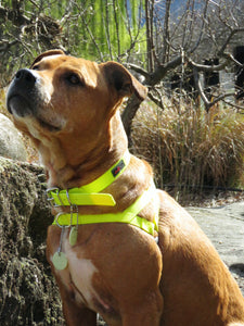 Ultrahund Freedom Harness - Yellow