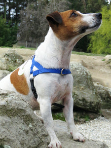Ultrahund Freedom Harness - Blue