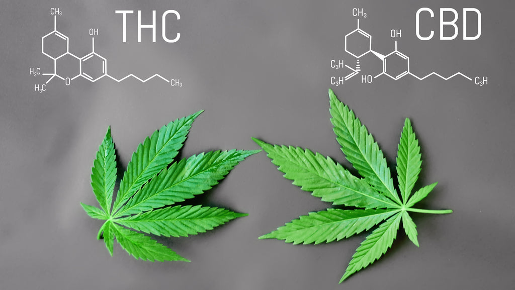 A Closer Look At CBD and THC