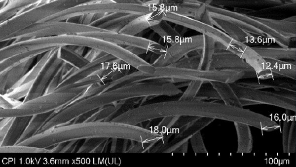 Clothing fibres under a scanning Electron Microscope