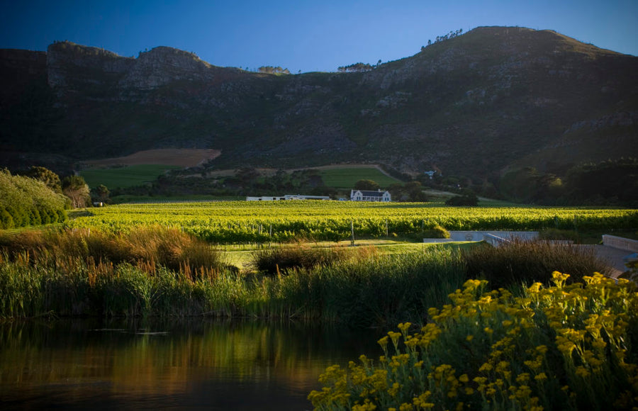 Cape Point Vineyards Sauvignon Blanc 2020