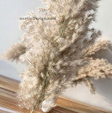 Pampas Flower Decoration