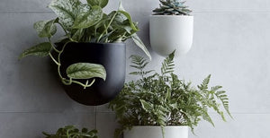 Wall Planters