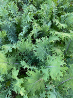 Load image into Gallery viewer, ORGANIC KALE