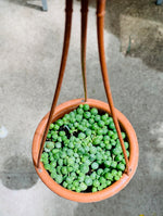 Load image into Gallery viewer, STRING OF PEAS