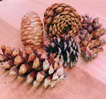 Load image into Gallery viewer, HAND PAINTED PINECONES