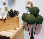 Load image into Gallery viewer, KOKEDAMA BALL ON STICK