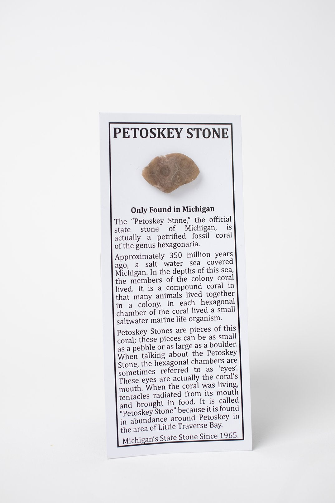 The Petoskey stone from Grandpa Shorter's Gifts