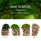 M-005 [ Moss Plant - White ]Natural Preserved Reindeer White Moss Art - free shipping