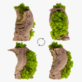 [ Moss Plant - Lime Green ] Natural Preserved Reindeer Lime Green Moss Art