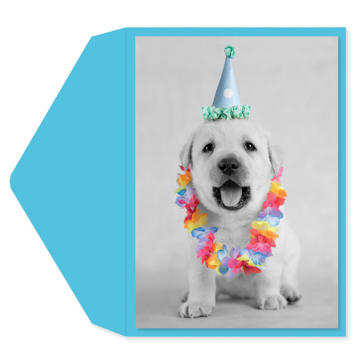 Puppy Party Hat Greeting Card