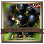 Bowman Blackcurrant (4635244593218)
