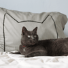 Gray Cat Nap Pillowcases by Xenotees