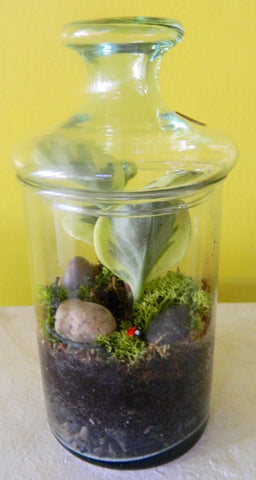 Short Terrarium with Lid