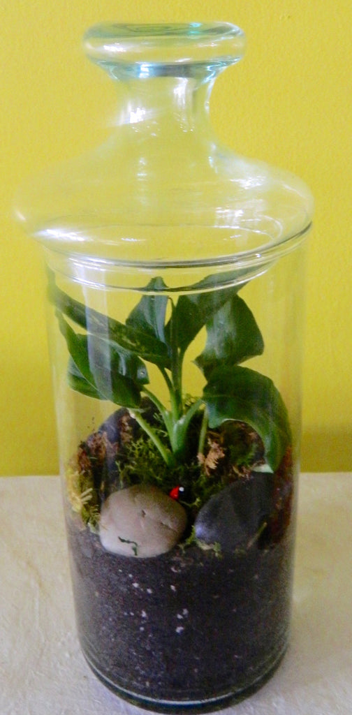 Midsize Terrarium with Lid