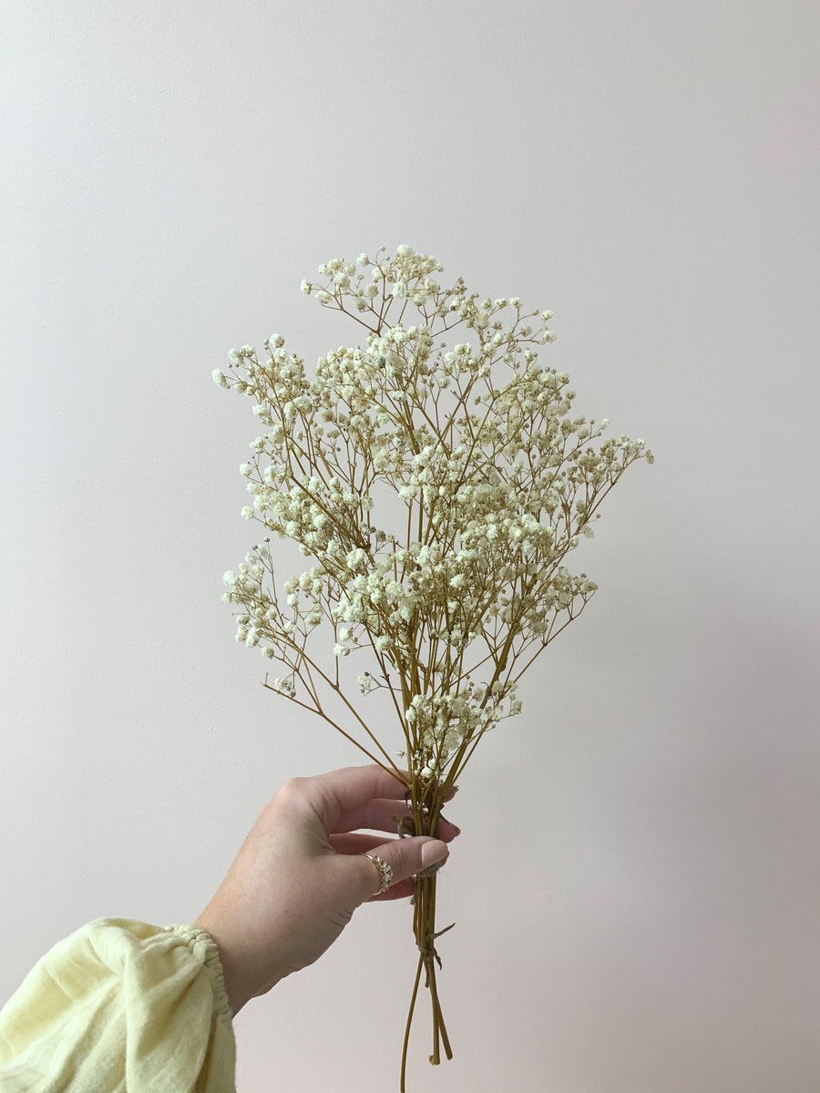 Gypsophila Natural