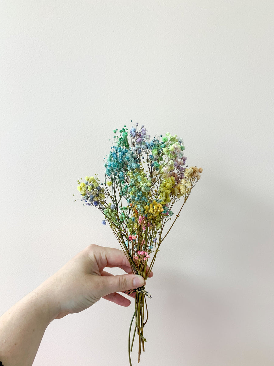 Rainbow Gypsophila