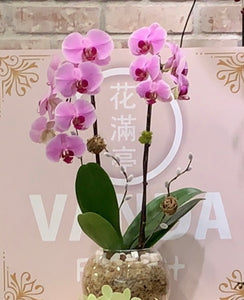 ORC001PR/2S - 2 Stems Orchids arrangement