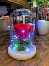 Load image into Gallery viewer, Forever Rose in Beauty Vase