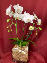 Load image into Gallery viewer, ORC001W/2S - 2 Stems Orchids arrangement