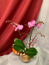 Load image into Gallery viewer, ORC002PW/2M - 2 stems Mini Orchids arrangment