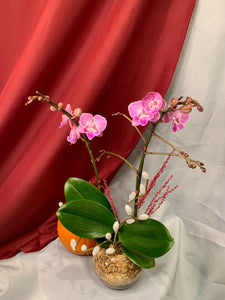 ORC002PW/2M - 2 stems Mini Orchids arrangment