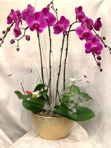 ORC001PU/4S - 4 Stems Orchids arrangement