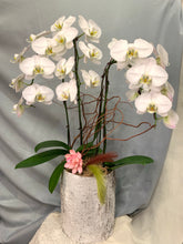Load image into Gallery viewer, ORC001W/4S - 4 Stems Orchids arrangement