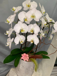 ORC001W/4S - 4 Stems Orchids arrangement